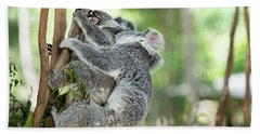 Beach Towel featuring the photograph Australian Koalas by Rob D Imagery