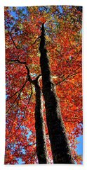 Beach Towel featuring the photograph Autumn Reds by David Patterson