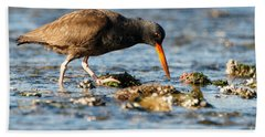 Beach Towel featuring the photograph Black Oystercatcher Pacific Coast by Sue Harper