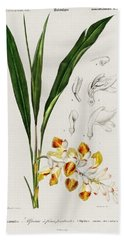 Dwarf Cardamom  Alpinia Nutans Illustrated By Charles Dessalines D' Orbigny  1806-1876  Beach Towel