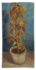 Flame Nettle In A Flowerpot Beach Towel