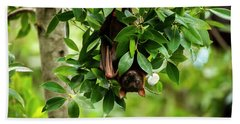 Beach Towel featuring the photograph Flying Fox Bat by Rob D Imagery