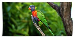 Beach Towel featuring the photograph Rainbow Lorikeet by Rob D Imagery