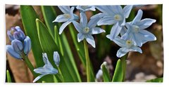 2019 Early April Striped Squill Beach Sheet