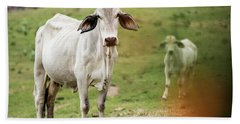Beach Towel featuring the photograph Australian Cow by Rob D Imagery