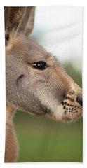Beach Towel featuring the photograph Kangaroo Outside During The Day Time. by Rob D Imagery