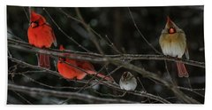 3cardinals And A Sparrow Beach Sheet
