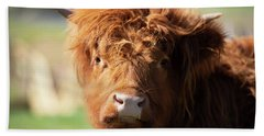 Beach Towel featuring the photograph Highland Cow On The Farm by Rob D Imagery