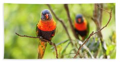 Beach Towel featuring the photograph Rainbow Lorikeets by Rob D Imagery