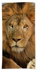 Beach Towel featuring the photograph 656250006 African Lion Panthera Leo Wildlife Rescue by Dave Welling