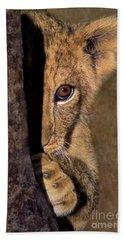 A Lion Cub Plays Hide And Seek Wildlife Rescue Beach Towel