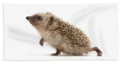 Beach Towel featuring the photograph A Prickly Problem by Warren Photographic