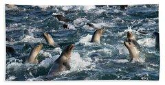 A Raft Of Sea Lions Beach Towel