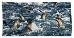 A Raft Of Sea Lions Beach Sheet