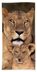 African Lions Parenthood Wildlife Rescue Beach Towel