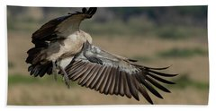 African White-backed Vulture Beach Towel