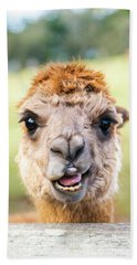 Beach Towel featuring the photograph Alpaca by Rob D Imagery