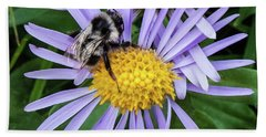 Beach Towel featuring the photograph Alpine Aster At Glacier National Park by Lon Dittrick
