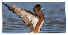 Beach Towel featuring the photograph American Wigeon Delight by Sue Harper