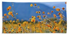 Beach Towel featuring the photograph Anza Borrego Wild Desert Sunflowers by Kyle Hanson