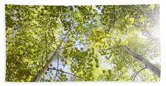 Aspen Canopy With Sun Flare Beach Towel