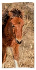 Beach Towel featuring the photograph Assateague Island Pony Foal by Kristia Adams