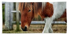 Beach Towel featuring the photograph Assateague Wild Horse Susi Sole N2bhs-m by Bill Swartwout Fine Art Photography