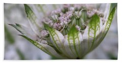 Astrantia Beach Towel