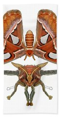 Atlas Moth5 Beach Towel