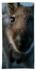 Australian Bush Wallaby Outside During The Day. Beach Towel