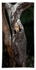 Beach Towel featuring the photograph Australian Masked Owl by Rob D Imagery