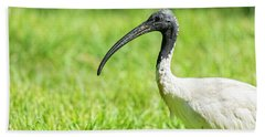 Beach Towel featuring the photograph Australian White Ibis by Rob D Imagery