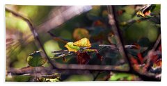 Beach Towel featuring the photograph Autumn Beginnings by Whitney Goodey