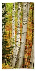 Beach Towel featuring the photograph Autumn Birch by Jeff Sinon
