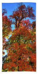 Beach Towel featuring the photograph Backlit Autumn by David Patterson