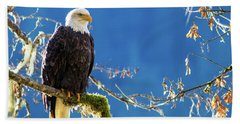 Backlit Bald Eagle In Squamish Beach Towel