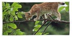 Balance Act...  Eurasian Lynx Beach Towel