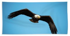 Bald Eagle In Flight  Beach Towel