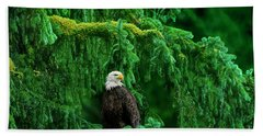 Bald Eagle In Temperate Rainforest Alaska Endangered Species Beach Towel