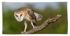 Barn Owl 5151801 Beach Sheet