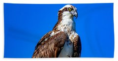 Beautiful Osprey Beach Towel