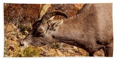 Beach Towel featuring the photograph Big Horn Sheep 2, Zion by Dawn Richards