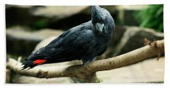 Black And Red Cockatoo. Beach Towel