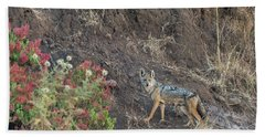 Beach Towel featuring the photograph Black Backed Jackal by Alex Lapidus