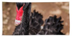 Beach Towel featuring the photograph Black Swan by Rob D Imagery