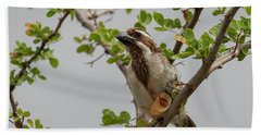 Black-throated Barbet Beach Towel