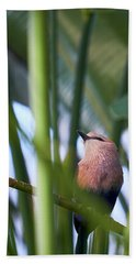 Beach Towel featuring the photograph Blue-bellied Roller by Whitney Goodey