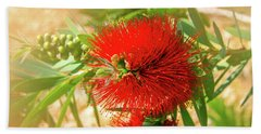 Bottlebrush Bloom Beach Sheet