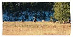 Beach Towel featuring the photograph Bull And His Babes by Pete Federico