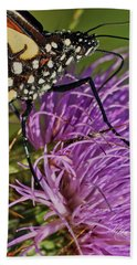 Butterfly Closeup Vertical Beach Towel